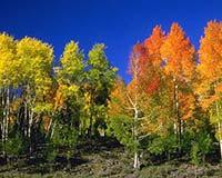 Фото прохлада летнего леса картинки